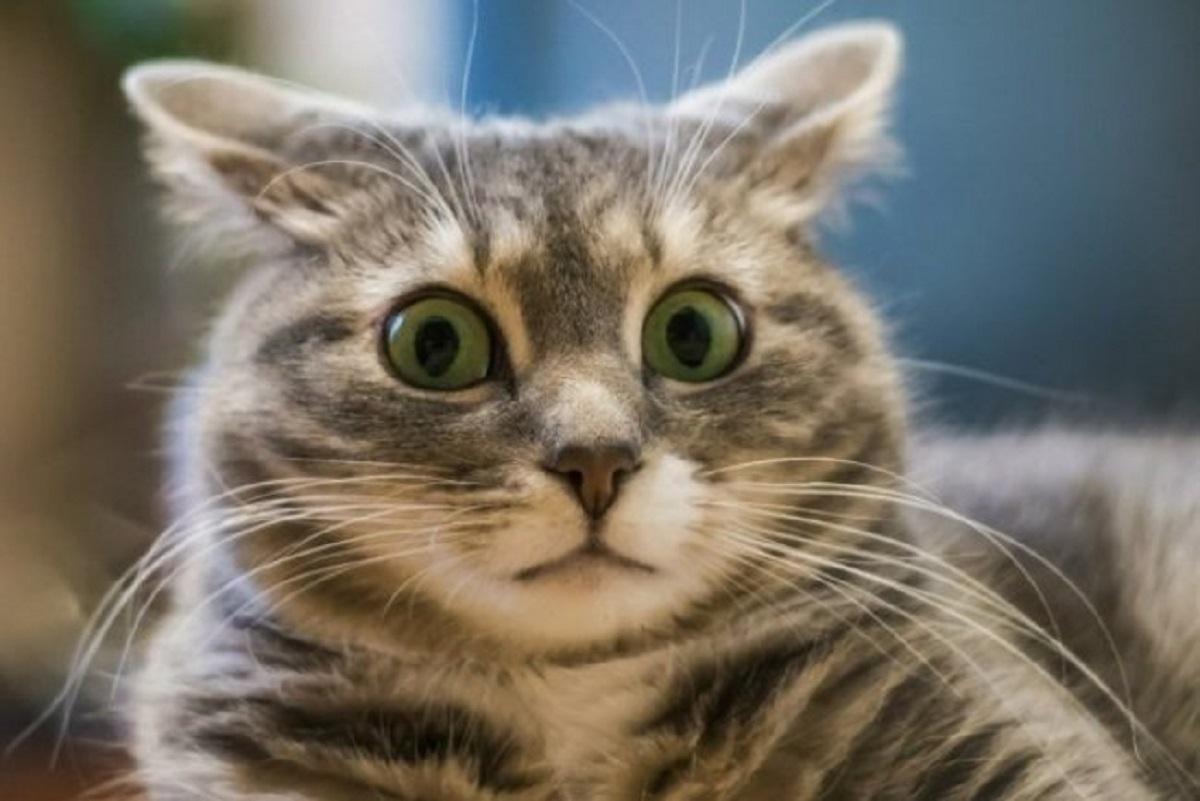 В Новой Зеландии хотят запретить заводить домашних кошек