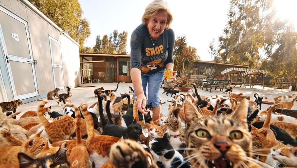 Няне для котов в Греции обещают платить 500 евро в месяц