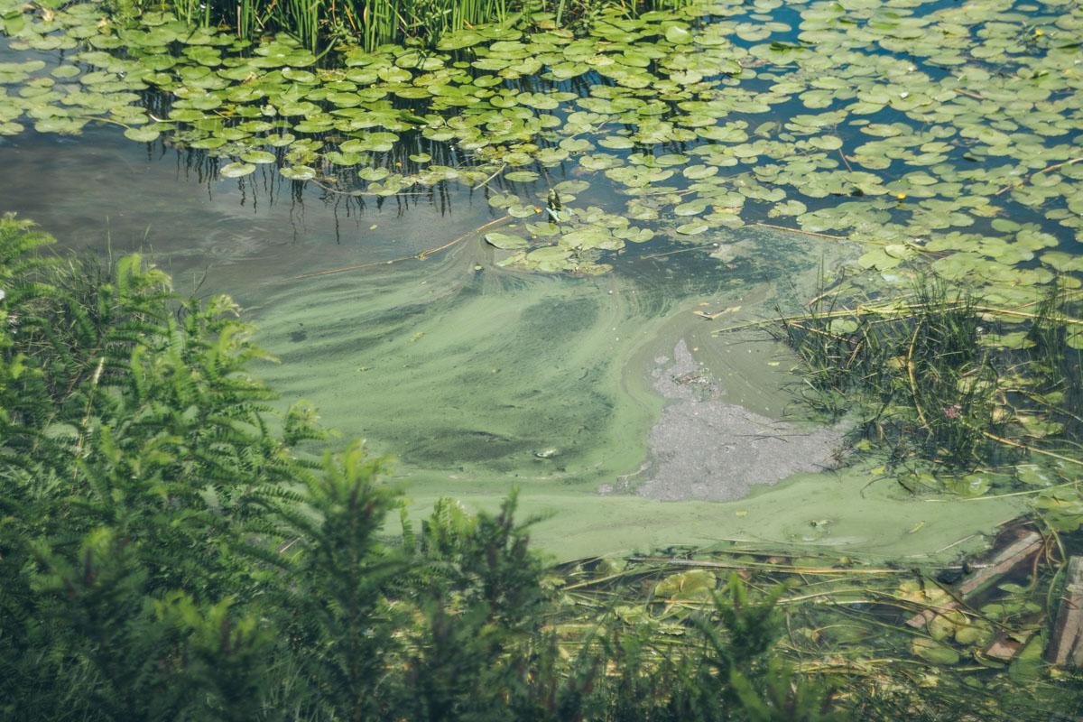 Вода приобретает неествественный зеленый цвет и неприятно пахнет