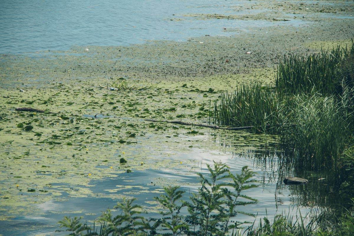 """Воду """"красят"""" водоросли, которые в летнее время года начинают аномально расти"""