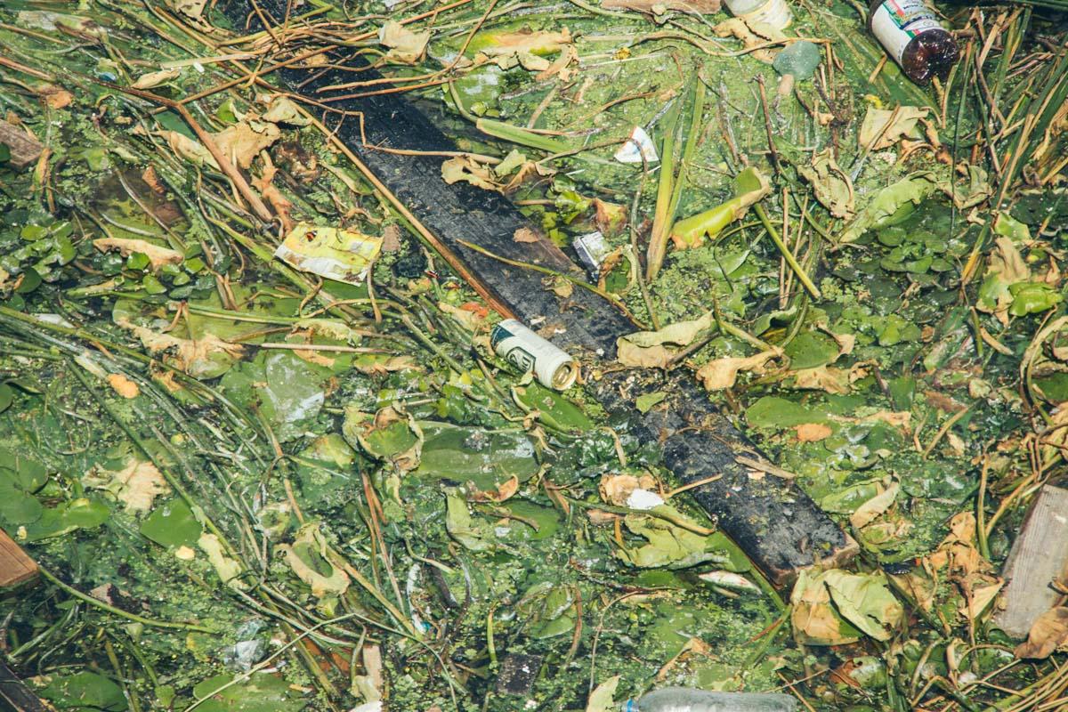 Течение относит зеленую вредоносную плетку в заросли