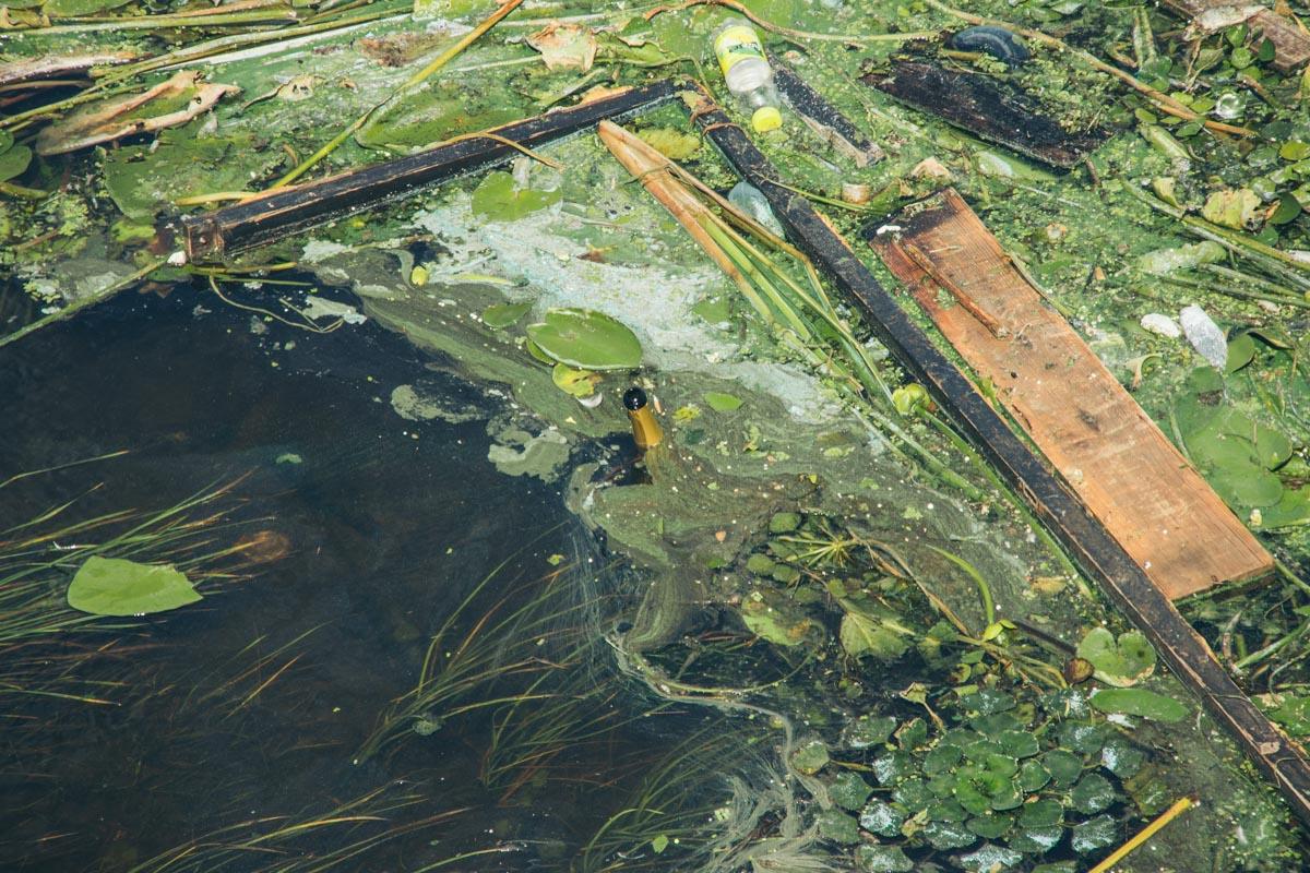 Здесь зеленая вода смешивается с мусором
