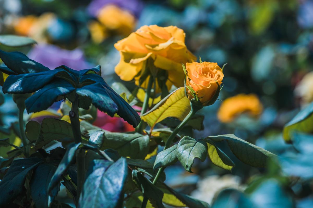 Теперь здесь благоухают цветы