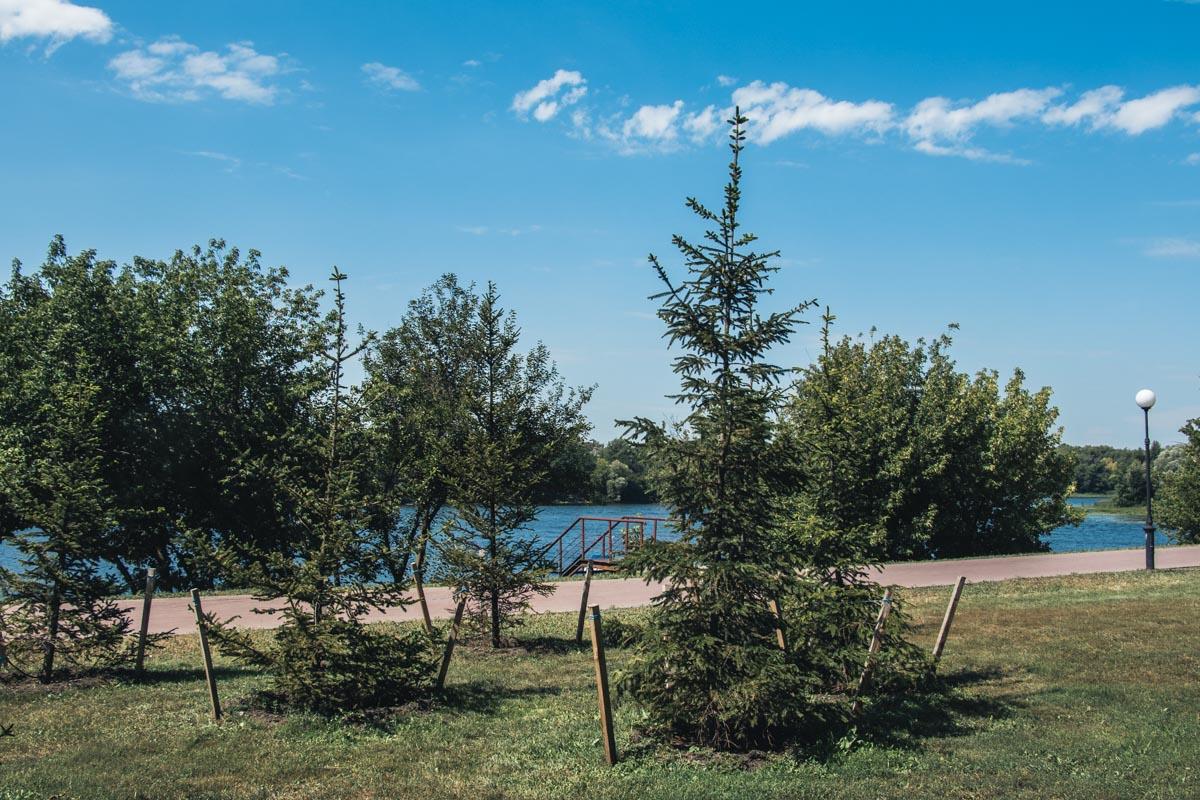 В обновленном парке обустроили 3,4 гектара газона