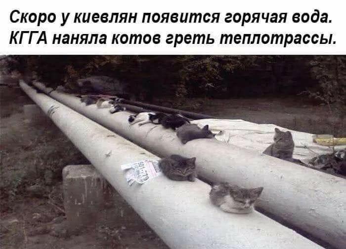 Не зря котики теперь охраняются законом