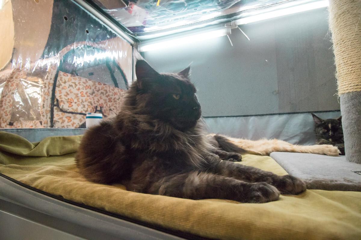 В эти дни на празднике собираются более 250 котов, кошек и котят