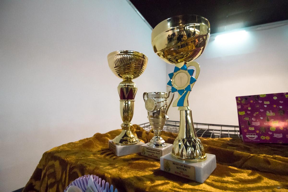 Помимо выставки здесь также проводятся соревнования среди хвостатых в самых разных номинациях