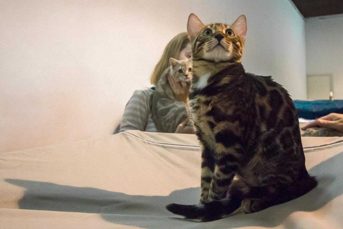 На выставке также можно приобрести воспитанных и получивших медицинский уход котят из разных питомников Украины