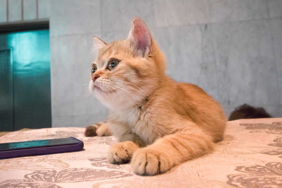 В Европейском доме проходит одно из самых любимых всеми кошатниками событий - бал котов