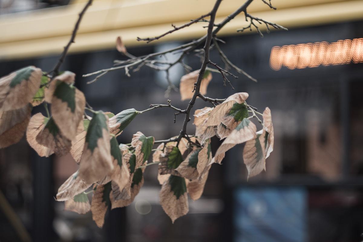 Смена поры года на примере листьев