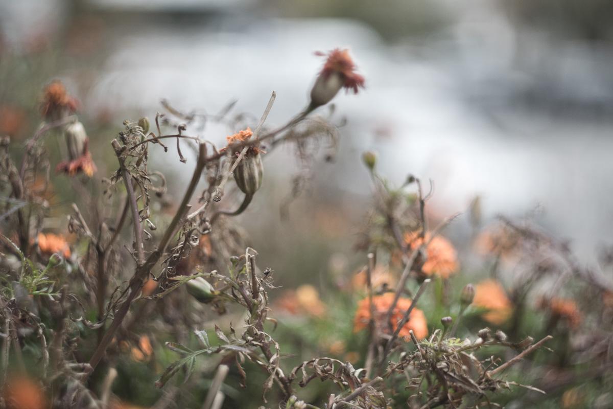 Лишь благодаря осени, мы сможем в должной мере оценить весну