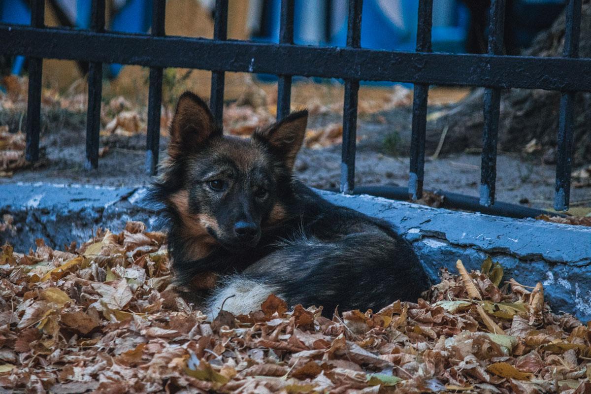Сонная собачка смотрит грустно, но в то же время с надеждой на что-то вкусненькое