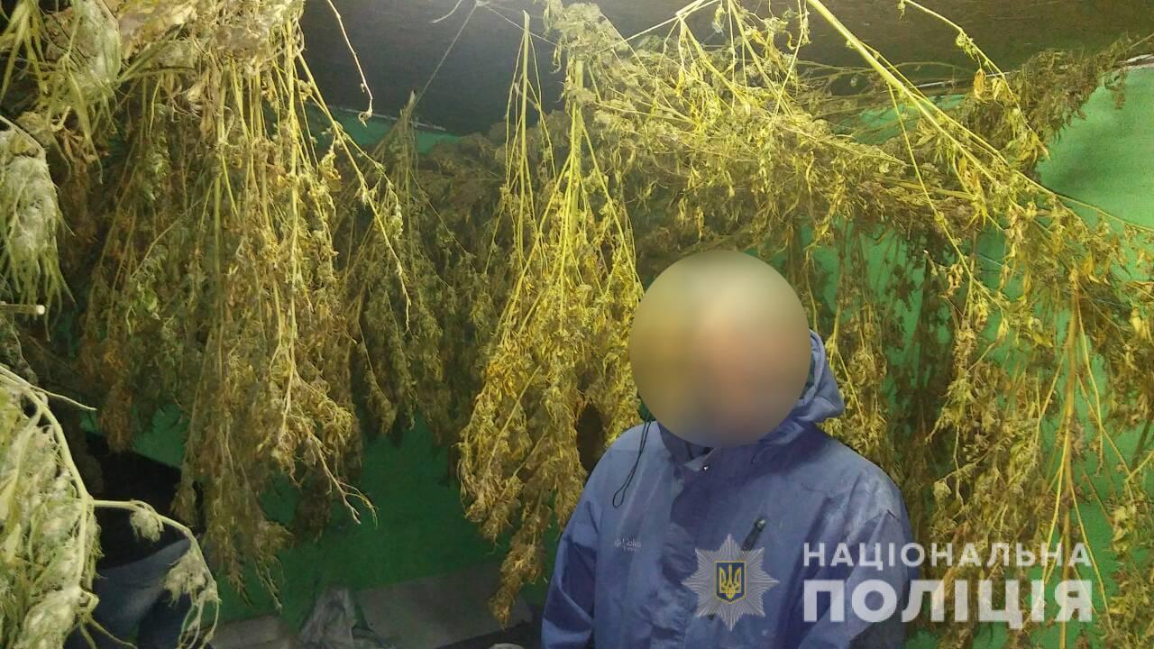 Житель Черкасской области хранил на своем участке 60 килограмм конопли