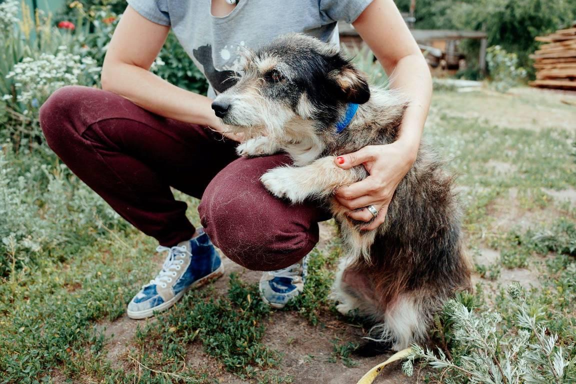 В собачке очень много нерастраченной любви к человечеству