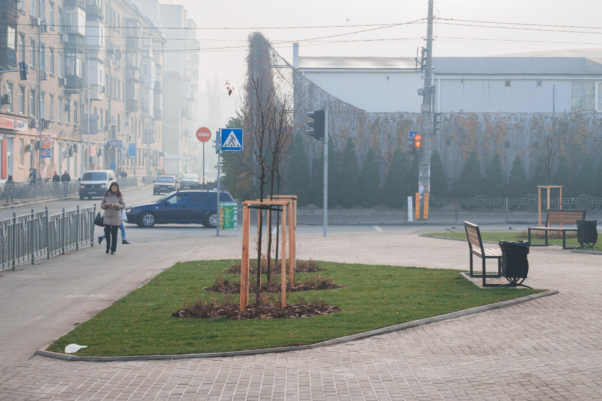 В сквере высадили новые деревья