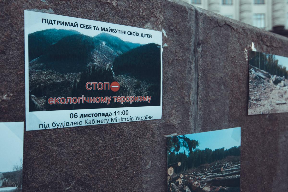 Фотографии противоправной вырубки леса