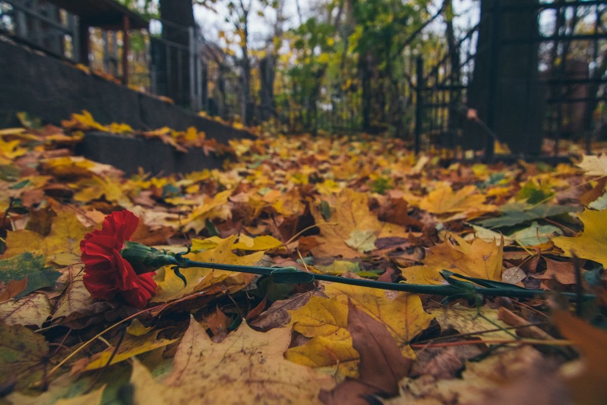 Серость разбавляют только краски желтых листьев