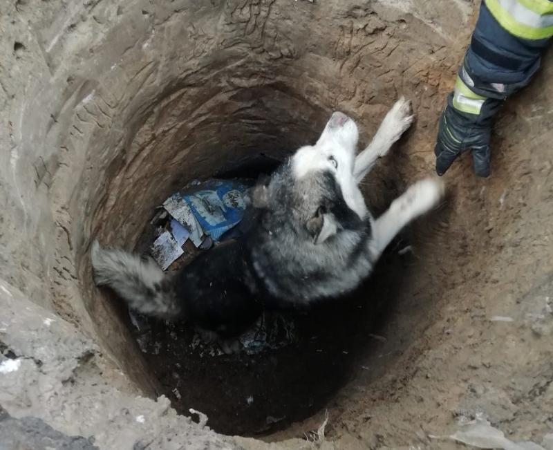 В четверг, 5 декабря, в Киевской области сотрудники ГСЧС спасли собаку от смерти