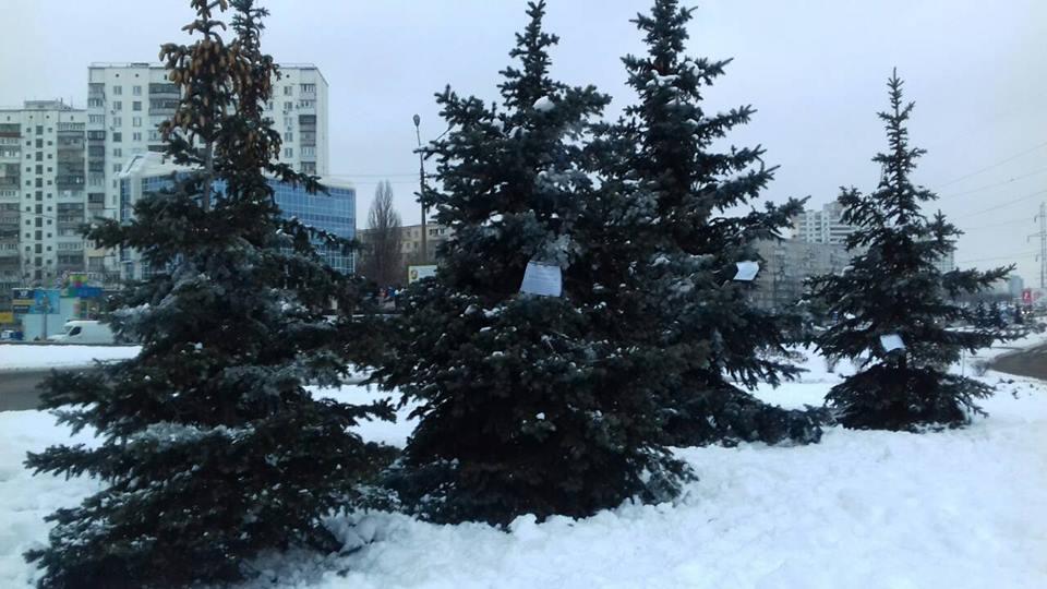 В столице елки обрабатывают химикатами