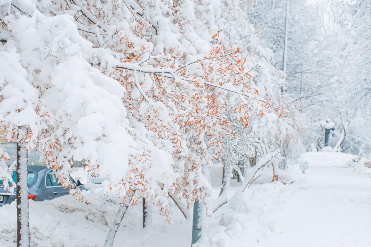 Любимый Киев под снегом становится ещё прекраснее обычного