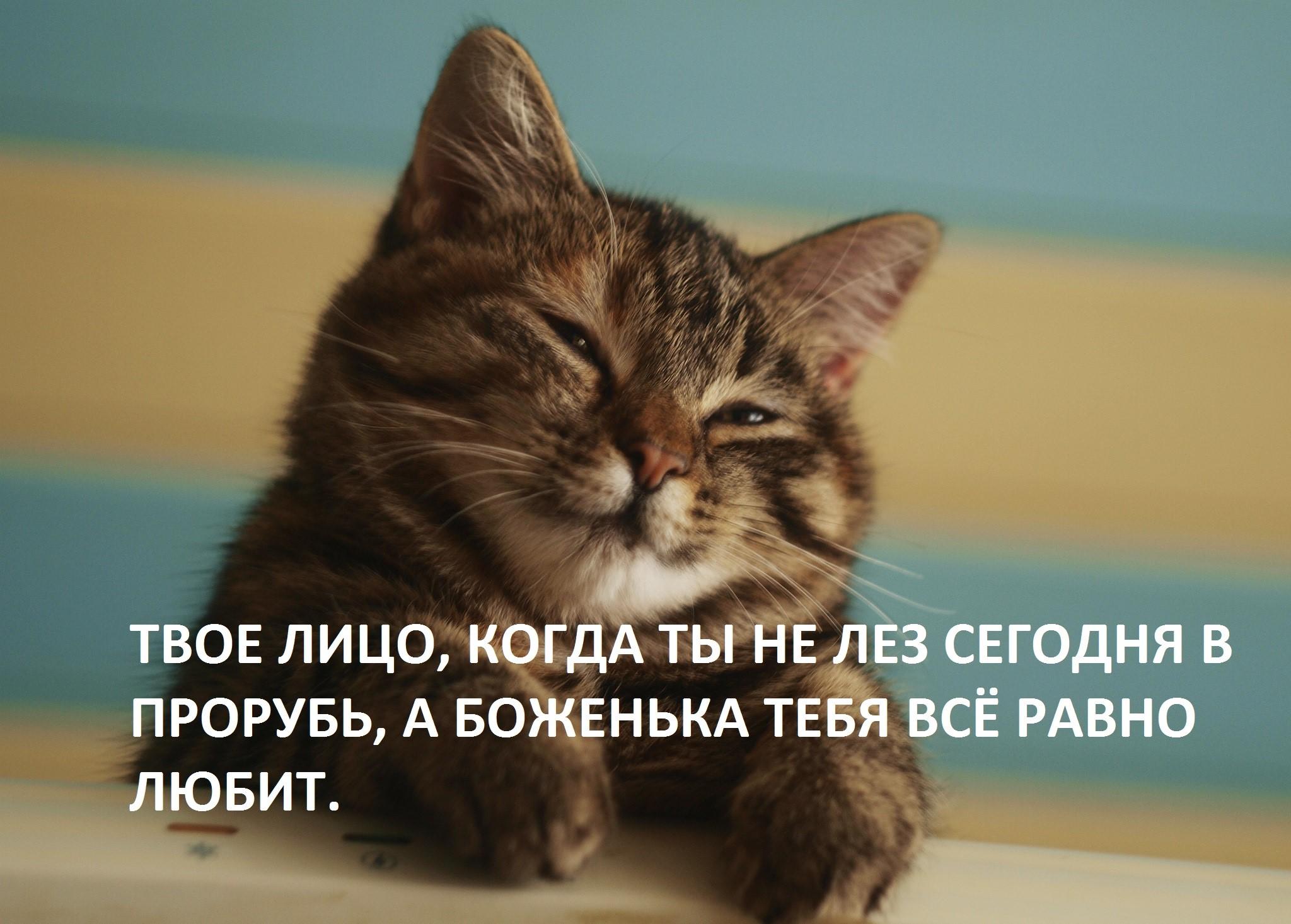 Котикам всегда проще, чем людям