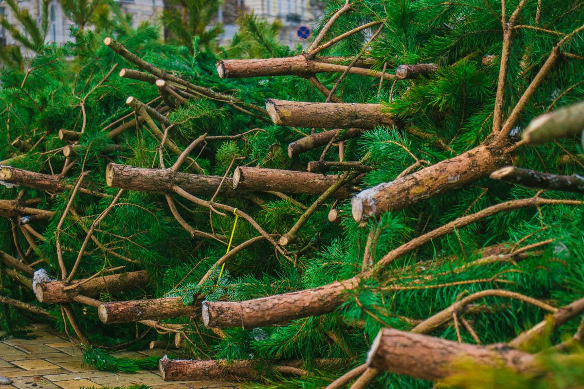 Главная елка Украины завоевала первенство в рейтинге самых красивых новогодних деревьев Европы