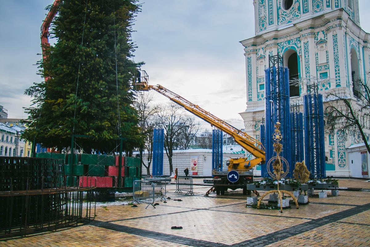 Зеленая красавица радовала жителей Киева с 19 декабря
