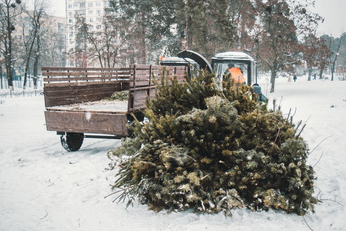 Жителей Киева просят сдавать елки в пункты сбора