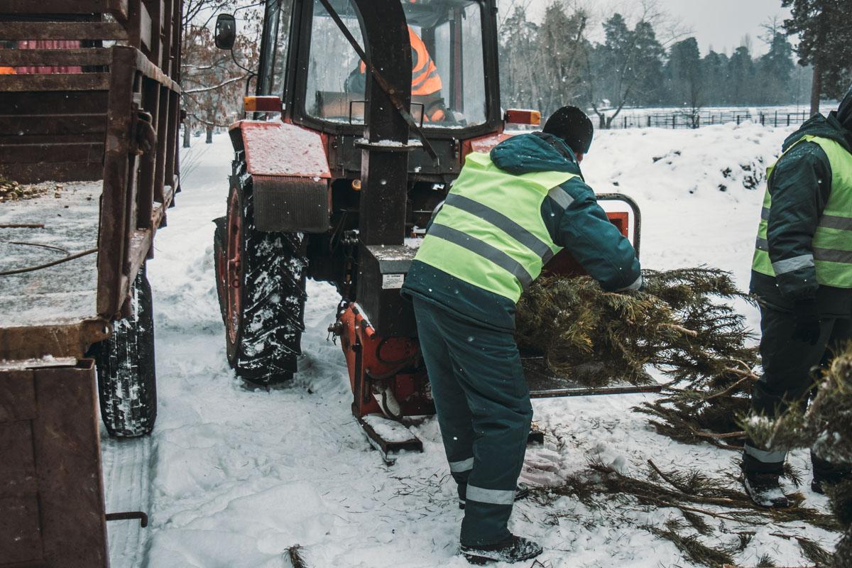 В Киеве утилизируют выброшенные елки