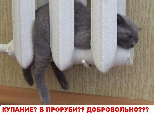 Котики не хотя купаться в проруби, так же холодно