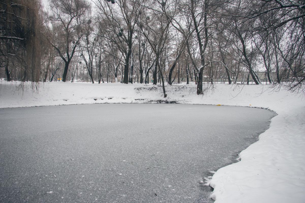 На месте разлива уже образовался лед, а у берегов озера рыбу найти не удалось