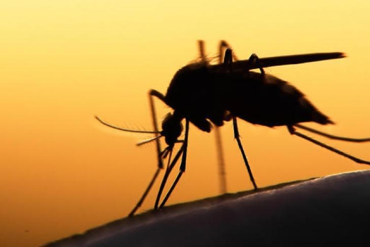 43-летнего бизнесмена из Львова госпитализировали с тропической малярией