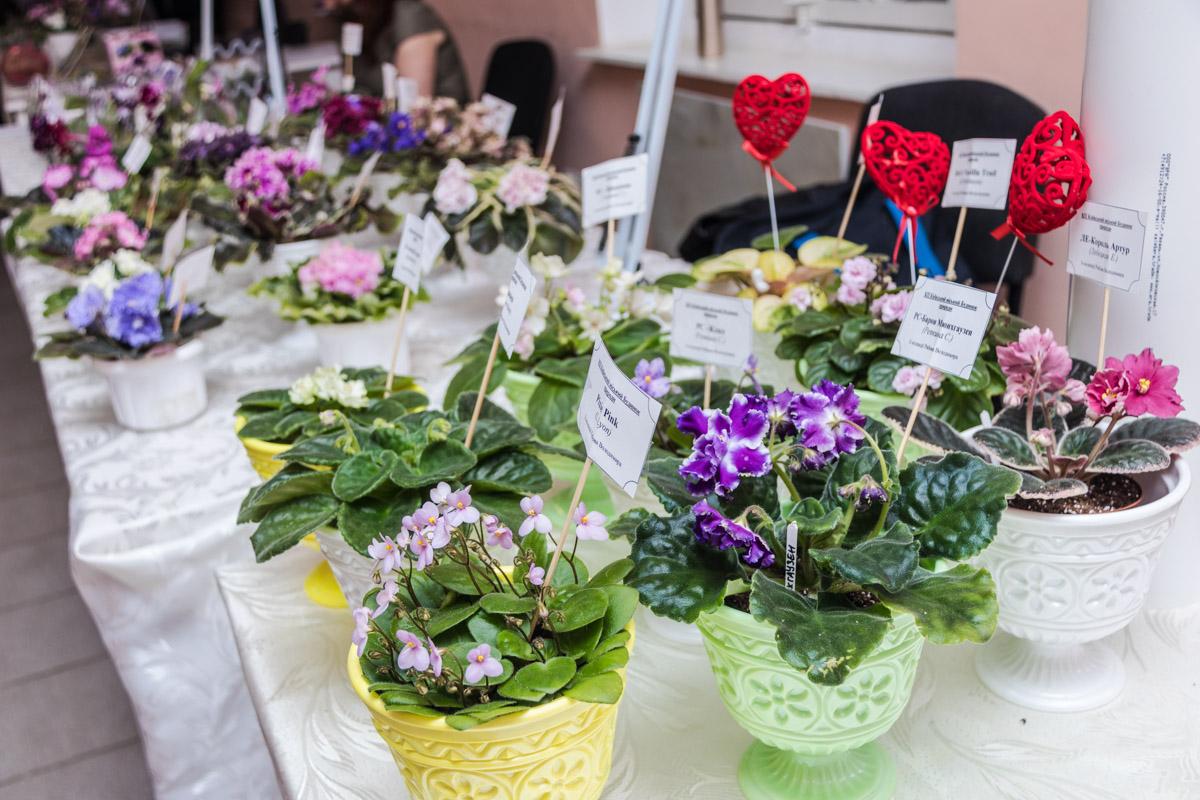 Ко Дню святого Валентина в Киеве устроили выставку фиалок и растений-хищников