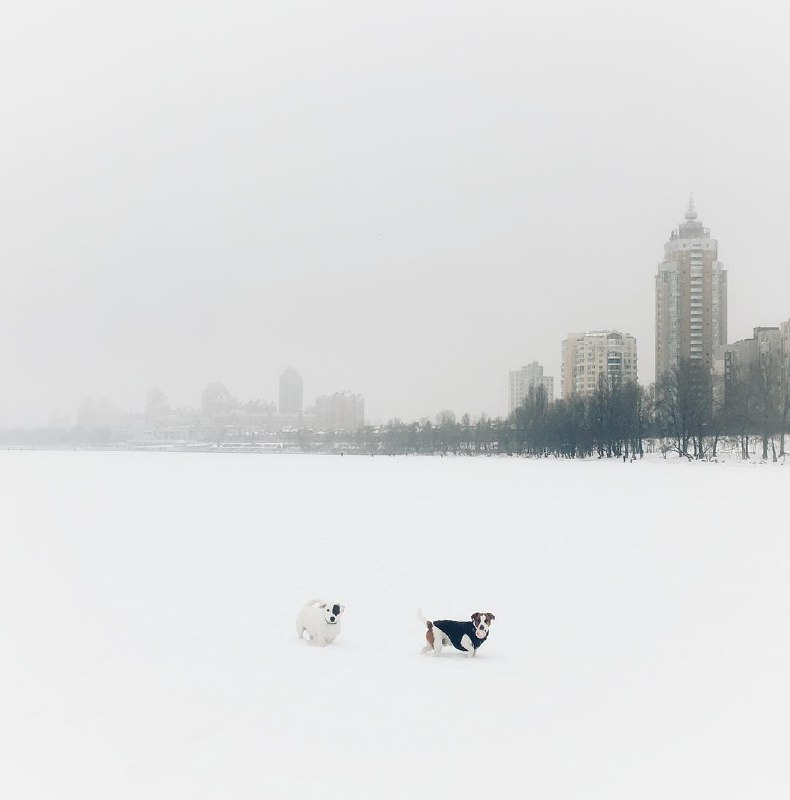 Спорим, в кадре две собаки? Фото: @jukudina