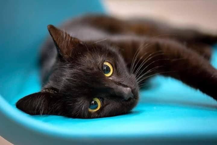 Нет, черные кошки не приносят несчастья, а наоборот - самые ответственные охранники домашнего очага