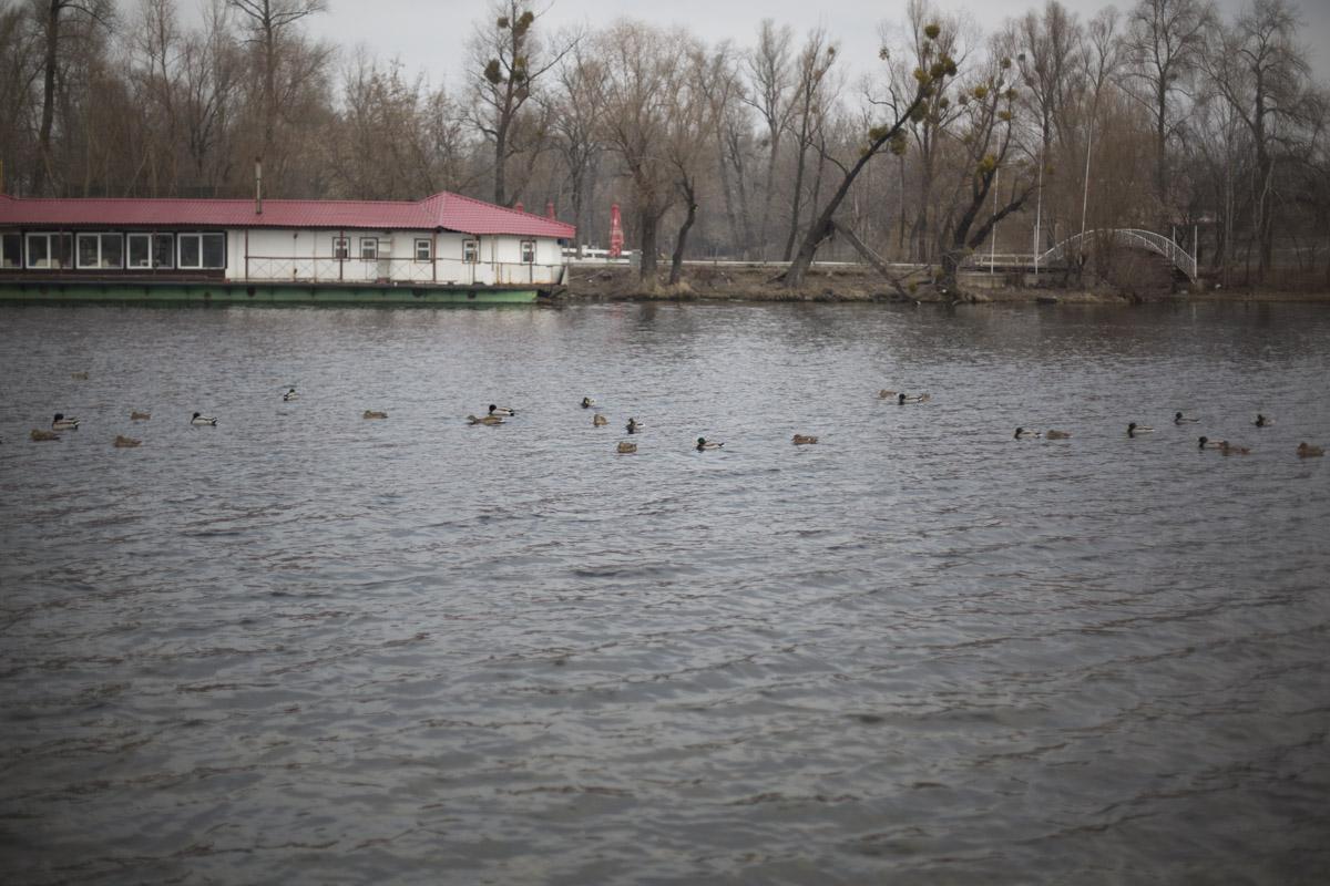 В зимний период в условиях урбанизации птицам критически не хватает природного корма