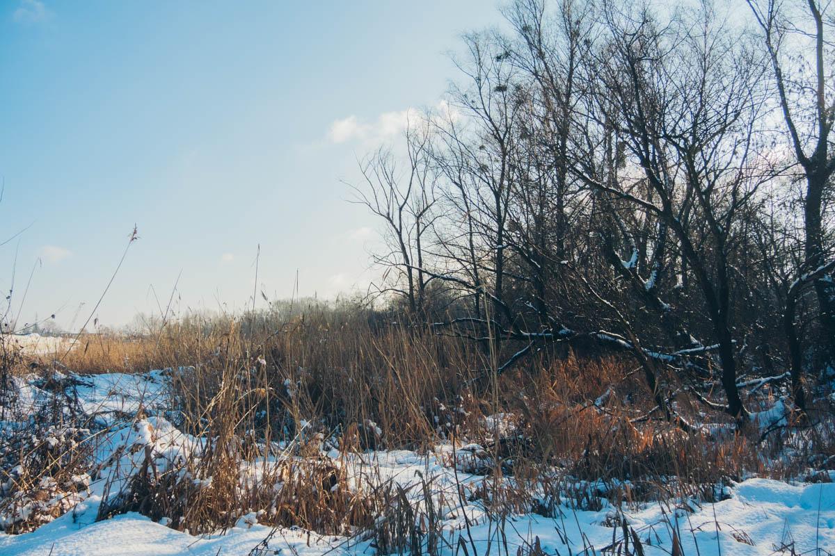 На данный момент местность покрыта сорняками и большим количеством деревьев