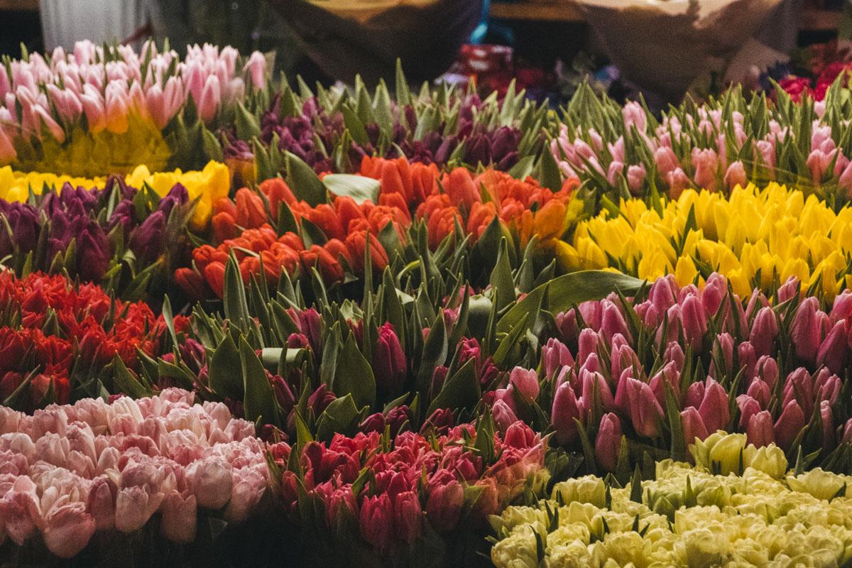 Тюльпаны, в свою очередь, практически не изменились в цене - и неделю назад и сейчас они стоят в диапазоне от 25 до 45 гривен