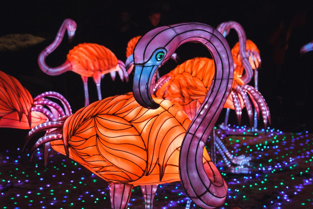 На выставке можно увидеть 40-метрового дракона, панд, фламинго и множество других скульптур из тысяч разноцветных фонариков