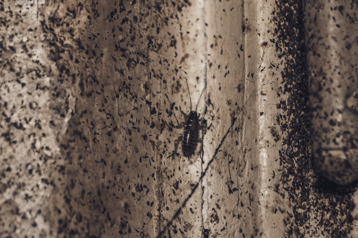 Тараканы буквально заполонили неблагополучную квартиру