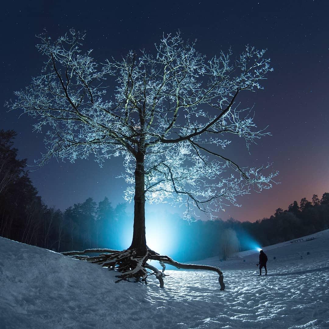 А в Пуще-Водице есть сказочное дерево. Фото: @sooba_booba