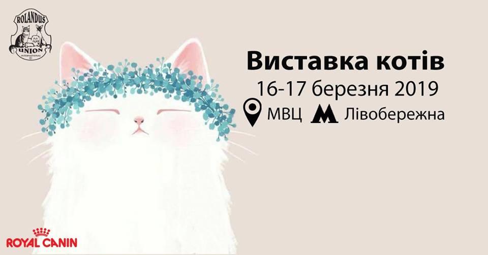 Выставка кошек - отличная идея для приятных выходных семьям с детьми