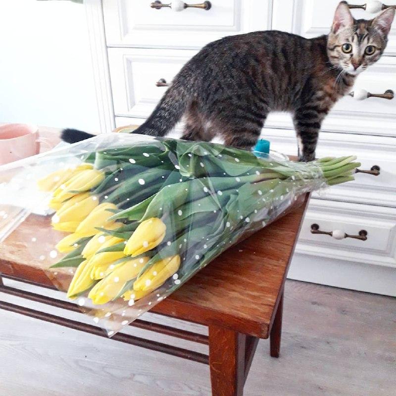 Или купить себе букет самой и представить, что тебе его подарил кот. Нет, ну а что? Фото: @oka_rozhkovskaya