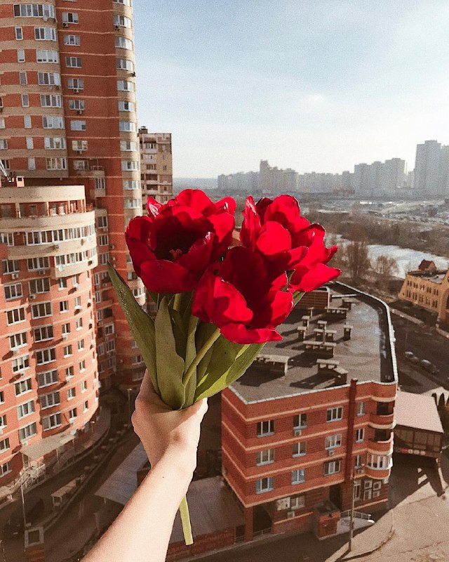 Киев, дарю тебе цветы! Фото: @veronica__ter