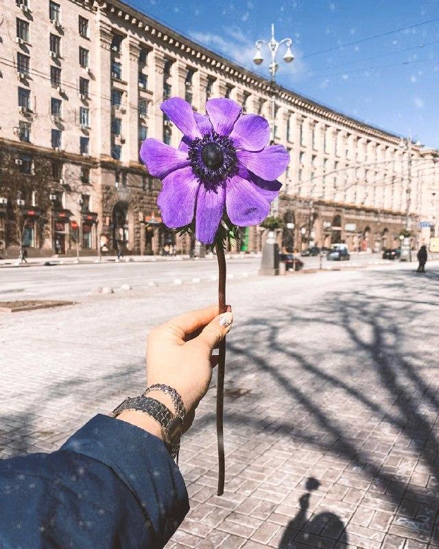Весна - пора цветов. Фото: @victoria_barkova