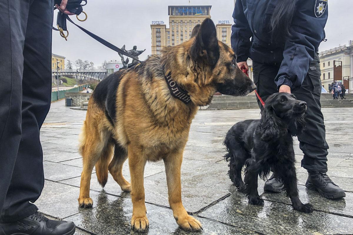 Кинологи с собаками обследуют территорию на наличие взрывоопасных предметов