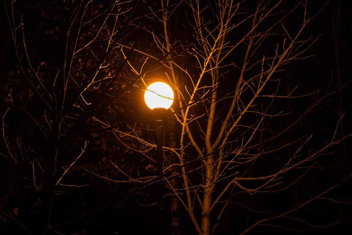 Фонарь выхватывает из ночного сумрака ветви одиноких деревьев