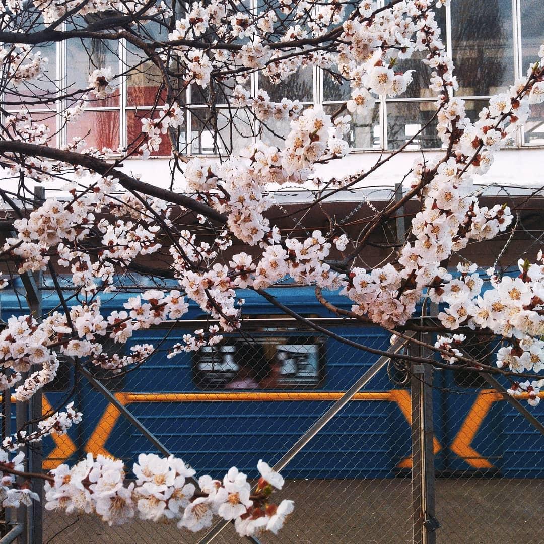 Цветущие деревья радуют глаз. Фото: @nastya_dudchyk