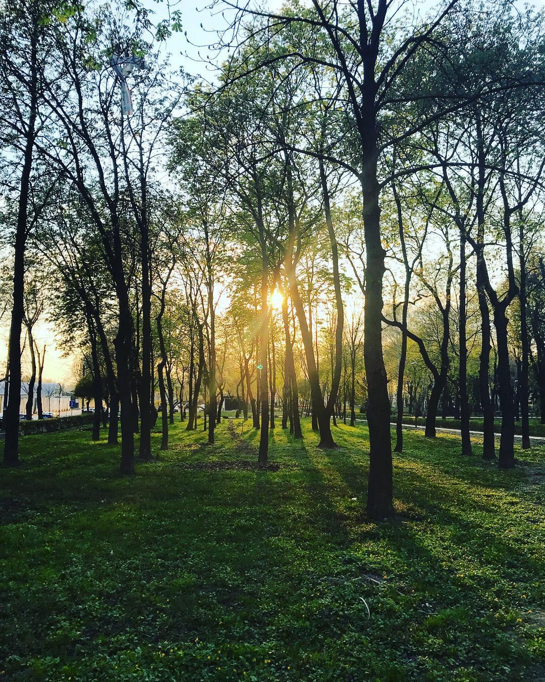 Солнечный свет пробивается сквозь деревья. Фото: taya_traveller
