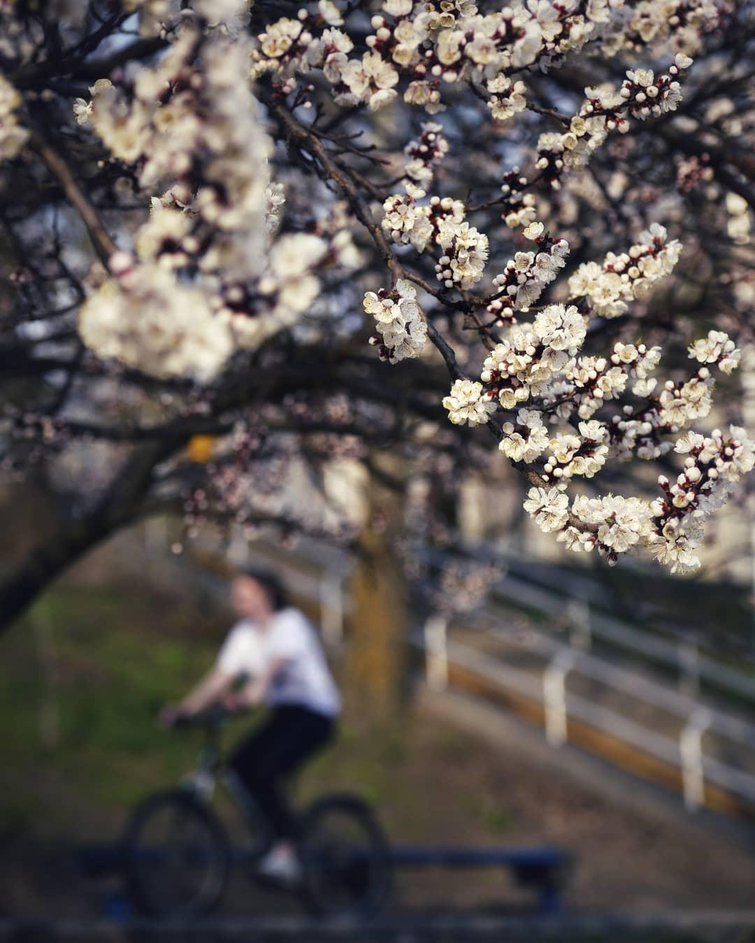 Почки деревьев мягко намекают, что весна пришла. Фото: @istetsen
